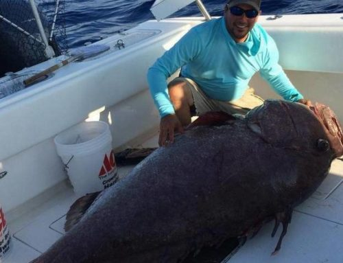 Monster fish caught off Florida: 347-pound grouper barely fit on boat
